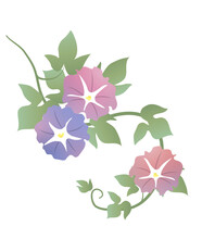 Japanese Style Vector Morning Glory Flower