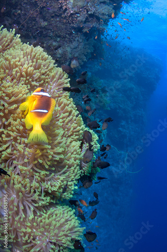 Photo Deadalos reef