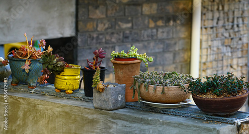 Fototapeta 작은 화분과 각종 다육식물 obraz