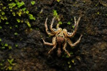 Spider On A Wet Wall During Th...