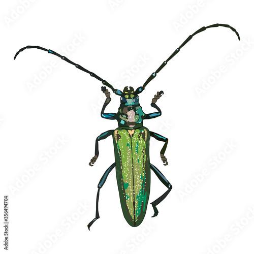 Obraz na płótnie A longhorn beetle isolated on a white background