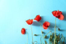 Beautiful Red Poppy Flowers On Light Blue Background, Flat Lay