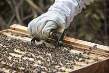 Crop Unrecognizable Beekeeper ...