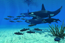 Orca Family - An Orca Whale Gr...
