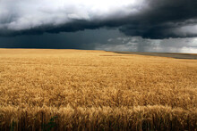 Storm Clouds Over Farmland In ...