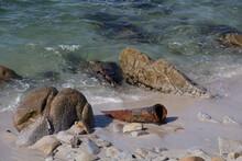 Rusty Pipe On A Sandy Beach