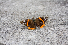 Butterfly On The Ground