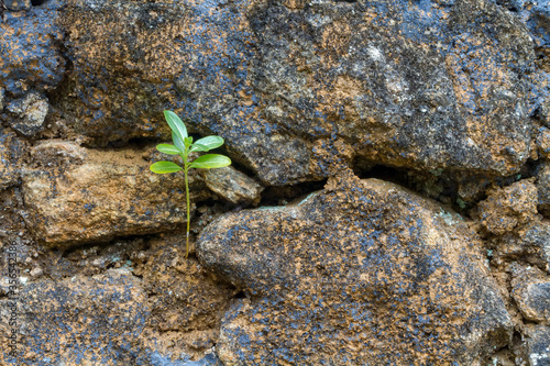 Small plant germinating in the rocks, adapting to the environment Wallpaper Mural