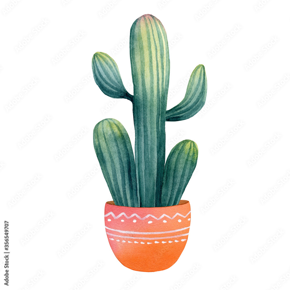 Fototapeta Watercolor hand painted exotic green cactus in a clay pot. Tropical succulent in the Mexican style. Clipart illustration of houseplant for background template, sticker, digital paper, home decor.