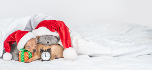 Toy terrier puppy and british kitten wearing red santa's hats sleep together with gift box and alarm clock on a bed at home. Panoramic view. Empty space for text