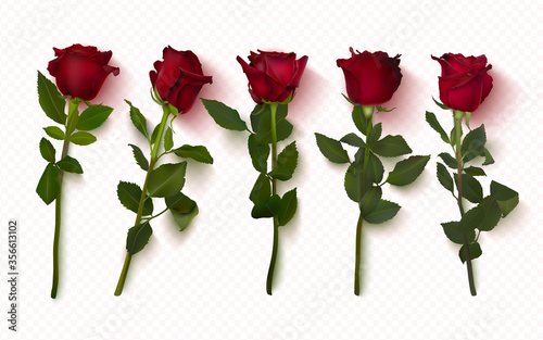 Fototapeta Set of realistic red roses on a transparent background
