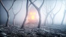 Stone Screaming Head In Fog Ni...