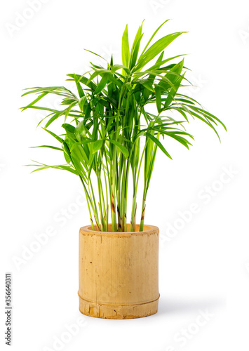 Decoration plant on bamboo pot