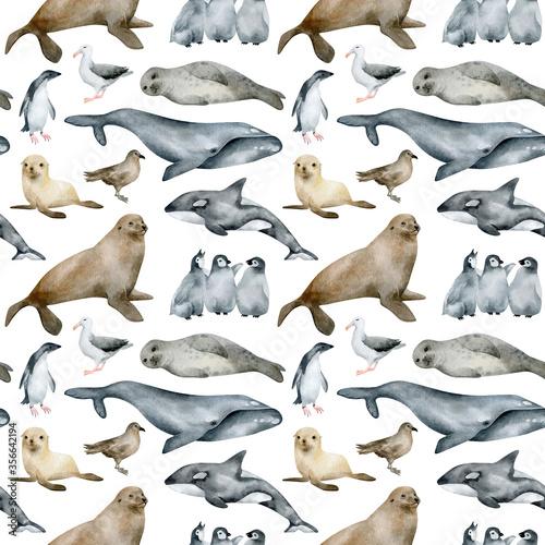 Fototapeta Watercolor seamless pattern with Antarctic animals