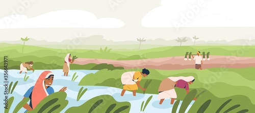 Obraz na plátně Smiling Indian farmers working in paddy field vector flat illustration