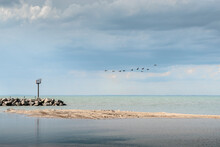 A Flock Of Canadian Geese Flyi...