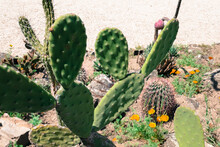 Botanical Garden In Vienna. Cactus, Plants And Flowers.