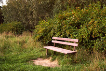 One Bench In The Woods. Wooden...