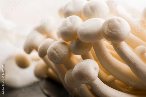 White beech mushrooms, Shimeji mushroom Tablou Canvas