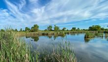 Marsh Pond Reeds Lilypad Blue ...