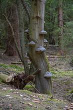 Waldsterben Im Arnsberger Wald