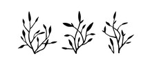 Doodle Twig - Illustration In A Flat Style. Tree Branches. Set Of Twigs Isolated On White Background. Spring Plant In Black