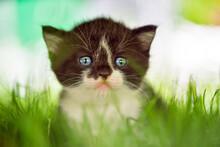 Portrait Of A Cute Blue-eyed K...