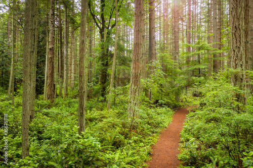 Lush Temperate Rain Forest Trail in the Pacific Northwest. Fir, cedar and hemlock trees are present in this colorful northwest rain forest located in the Salish sea area of western Washington state.