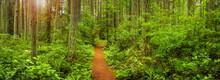 Lush Temperate Rain Forest Tra...