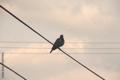 Fotografija bird on a wire