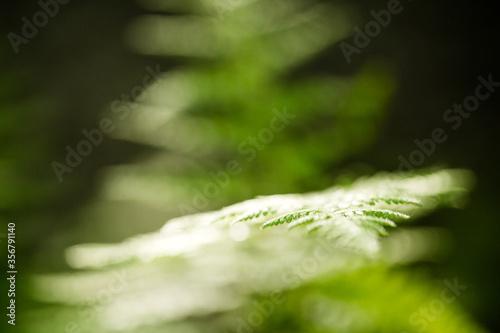 green monochromatic fern plant  leaves trees