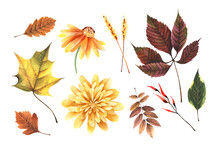 Watercolor Hand Painted Autumn Set With Leaves Maple, Grape, Yellow Flower, Chrysanthemum. Fall Floral Clipart For Design Digital Paper, Sticker, Invitation, Home Decor. Isolated On White Background.