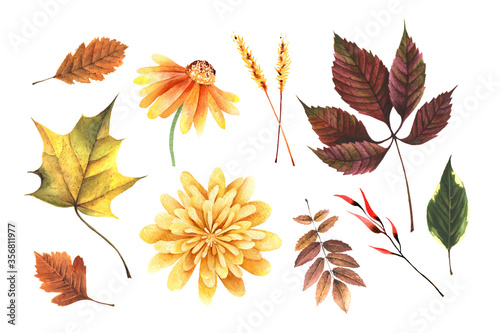Wallpaper Mural Watercolor hand painted autumn set with leaves maple, grape, yellow flower, chrysanthemum