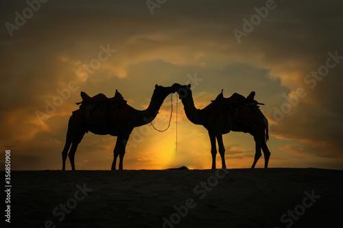 Fotografija Couple Camel caravan going through the desert