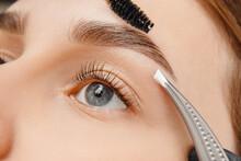 Master Tweezers Depilation Of Eyebrow Hair In Women, Brow Correction