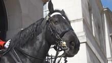 A Guard's Horse Looking At The Camera.