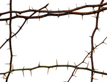 Isolated Frame Made From Thorn...