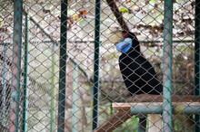 Hornbills In The National Park