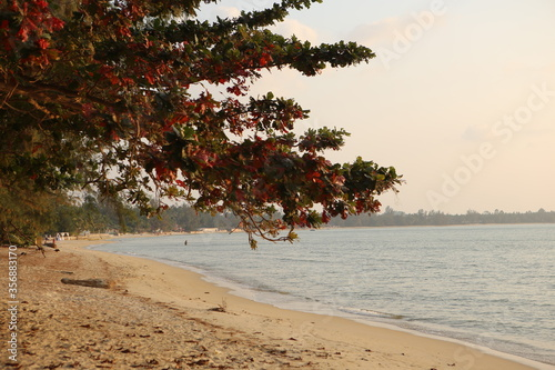 beautiful panorama seascape shot of a white yellow sand beach with green and red leaved trees, blue ocean water and a bright sky with soft pretty pink orange tones Fototapet