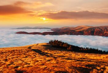 Fototapeta Vintage Breathtaking morning moment in alpine foggy valley.