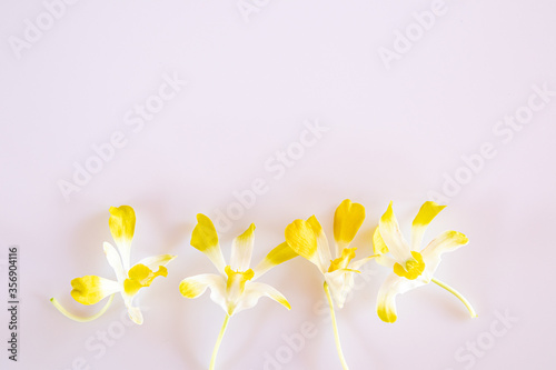 Fototapety, obrazy: Yellow and white orchid flowers on a white background.