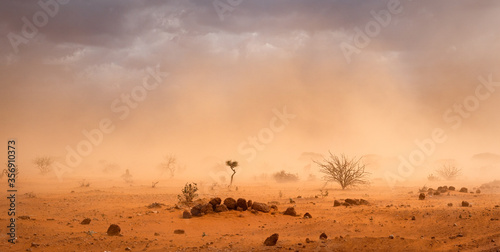 Fotografía Climate change in Africa concept: Yellow orange dusty sandstorm with rocks, sand, bushes and dark clouds