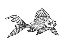 Goldfish Aquarium Fish Sketch ...