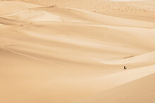 Tiny Human Walking In The Sea Of Sands