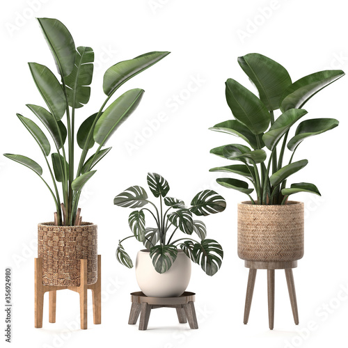 Houseplants plants in a basket on white background Canvas