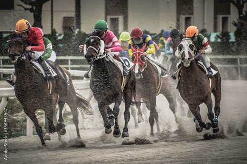 Fotomural competitive horse racing in heavy sandstorm.
