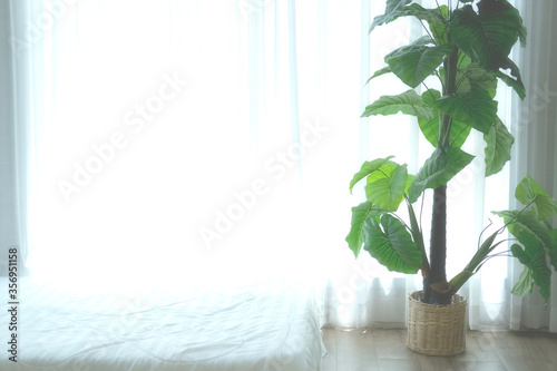 Fototapeta artificial plant leaves beside see through window curtain. obraz