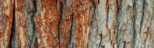 Natural wooden texture background Wallpaper Mural
