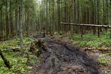Northern Swamps Of Karelia. Wi...