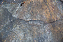 Weathered Tree Trunk Texture B...